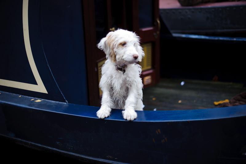 Piesek na łódce