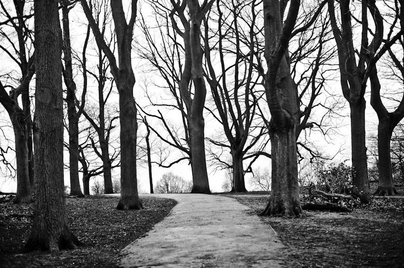 Drzewa, Londyn