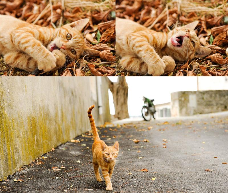 Koty Chorwacja