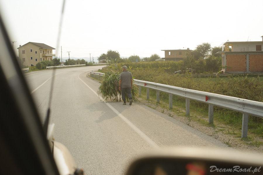 Na albańskich drogach jest wszystko, ale nie przeszkadza to wcale, gdyż drogi są szerokie, a asfalt w doskonałym stanie. Dlatego też pobocze żyje własnym życiem i nikomu to nie przeszkadza.